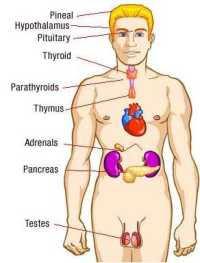 хормони и гинекомастия
