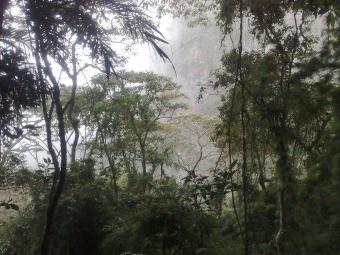 bosques de niebla Café bosque de niebla es un café espectacular de risaralda descubre los  sabores a frutos rojos, panela, floral y caramelo enviamos a toda colombia.