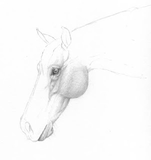 Horse Head by Jennifer Phillip