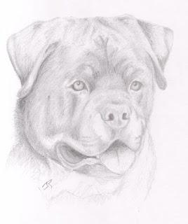 Rottie Sketch by Jennifer Rose Phillip