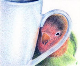 Coloured pencil Love bird by Jennifer Rose Phillip