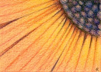 coloured pencil flower Copyright Jennifer Rose Phillip