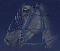 grey horse in coloured pencil White Knight Copyright Jennifer Rose Phillip