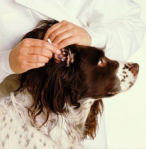 how to clean hard wax from a dogs ear
