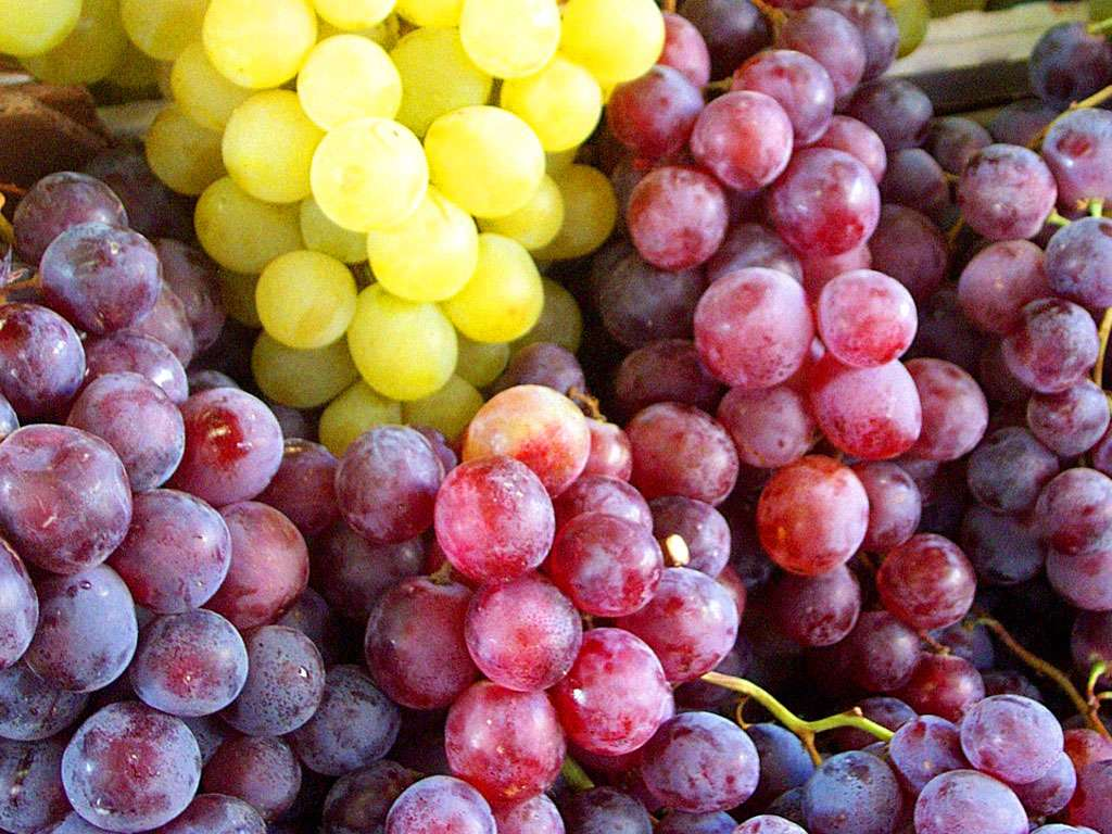 Poisonous Foods For Dogs Grapes