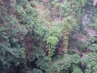 Goa jomblang grubug petualangan pic
