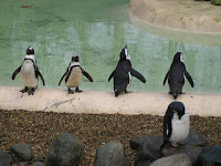 Penguins at the London Zoo