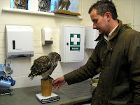 Weighing a bird at Leeds Castle