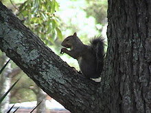 Can a Squirrel enjoy a nut???
