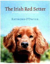 """The Irish Red Setter"" by Ray O'Dwyer"