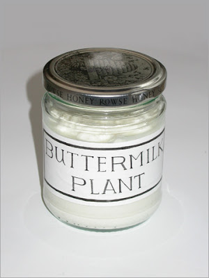 Buttermilk Plant