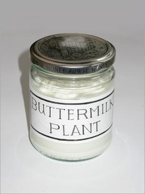Buttermilk Plant