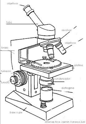 Partes Del Microscopio Y Para Que Sirven 1 Picture
