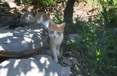 El territorio del gato: efectos de un cambio de casa