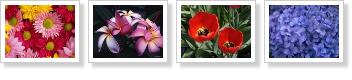 Sombra en las imágenes de tu blog con CSS