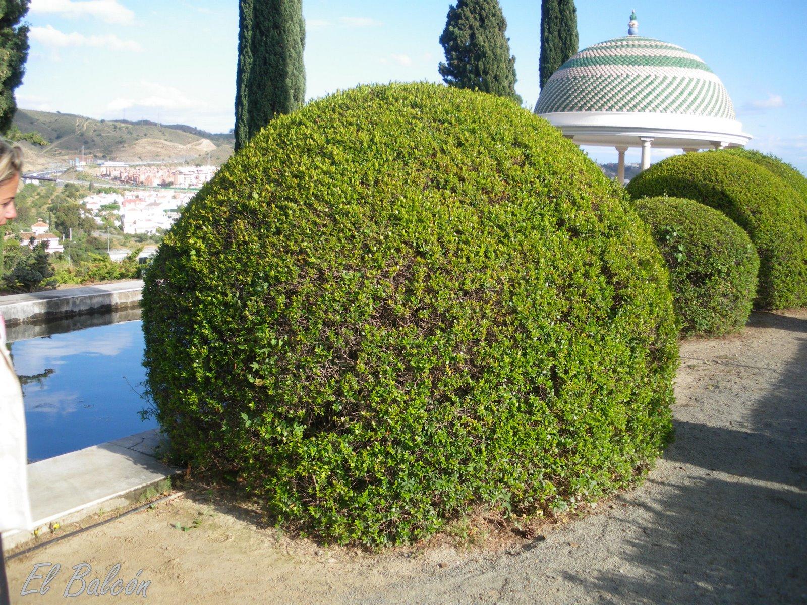 Como cultivar setos frondosos cuidado de plantas - Setos de jardin ...