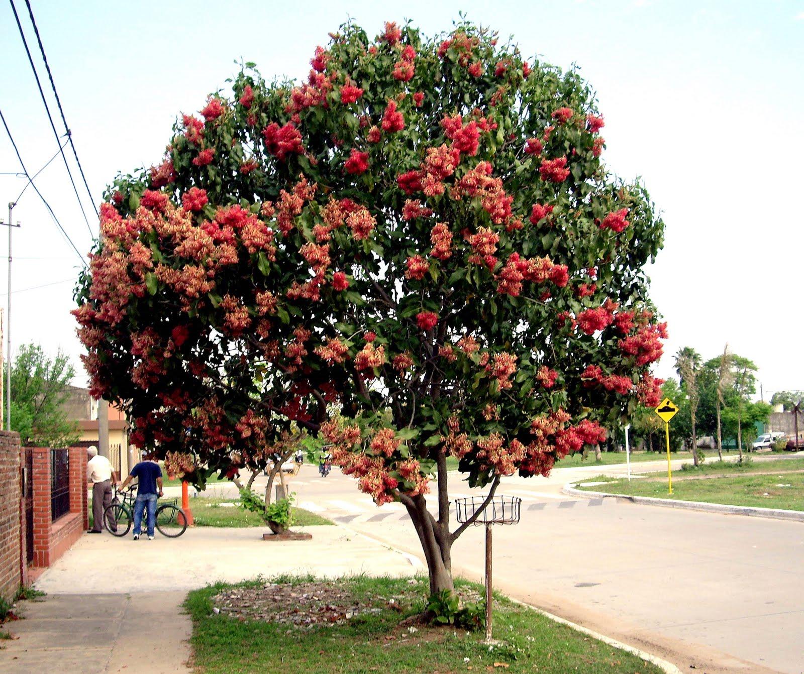 V e r d e c h a c o manzano de campo duraznillo for Arboles perennes en argentina