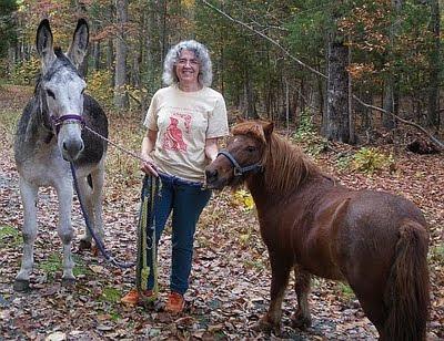 miniature horse and donkey
