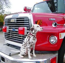 Fire Dog Argus