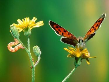 -borboletas-lagarta.jpg