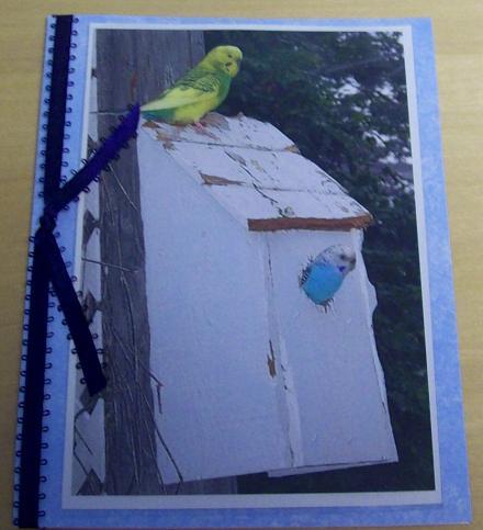 TPA Park - 2 parakeets
