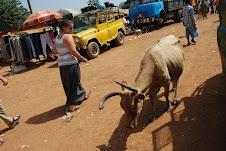 The Market - Telimele, Guinea