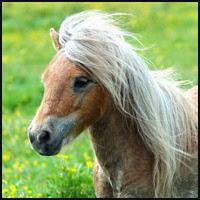 Masterbating Ponies