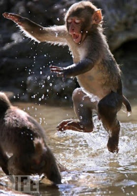Monkey in a cold water