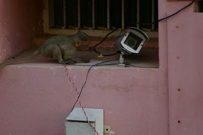 Spy monkey