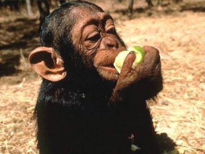 Monkey likes apple