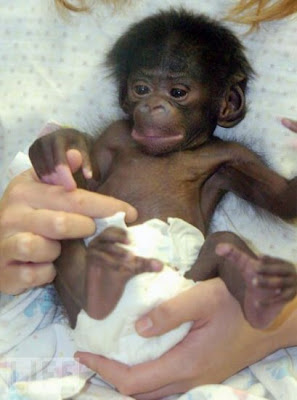 Baby monket right after birth