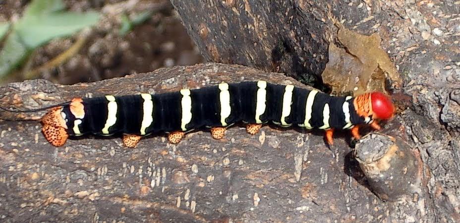 Badkamer Accessoires Oss ~ Bruin Oranje Rups Schadelijke insecten Vlindernet rupsen