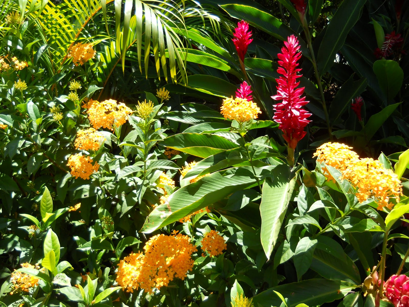 Sunshine Garden Kara S Party Ideas Stellar You Are My