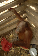 Another palm oil victim