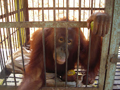 Solitary confinement courtesy of Indonesian zoo