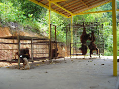 Torture chambers for orangutans at an Indonesian zoo