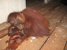 Tortured by palm oil company employees