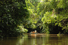 Tropical forest, home to orangutans etc.