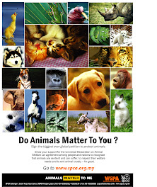 Do Animals Matter To You