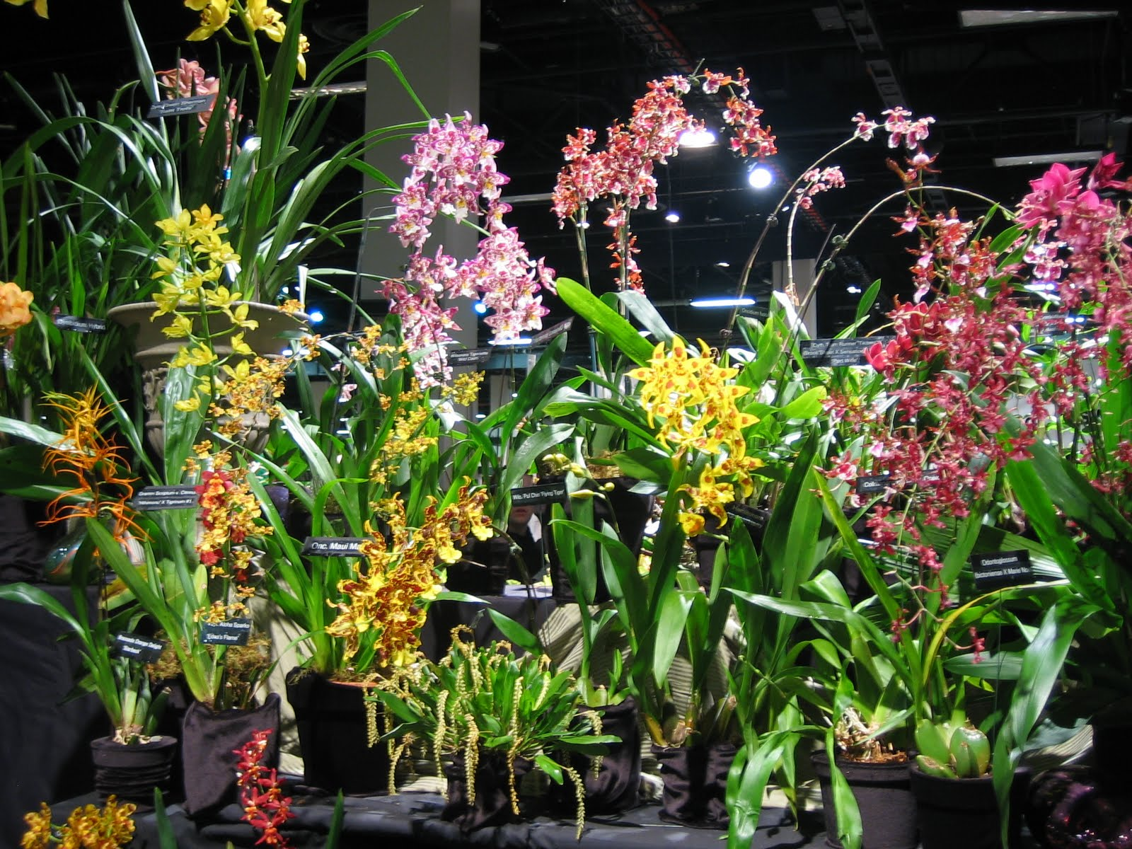 Journeys and Jonquils The Boston Flower & Garden Show 2010