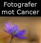 Fotografer mot cancer