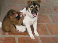 Khỉ và Míc