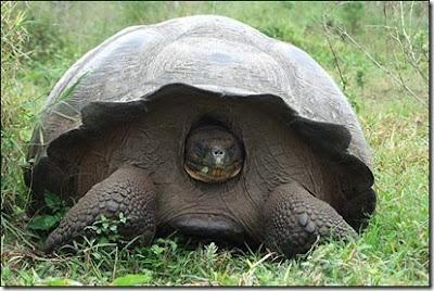antes de que las tortugas estén en una situación precaria