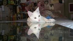 stich espejo