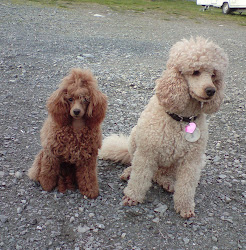 Hundene