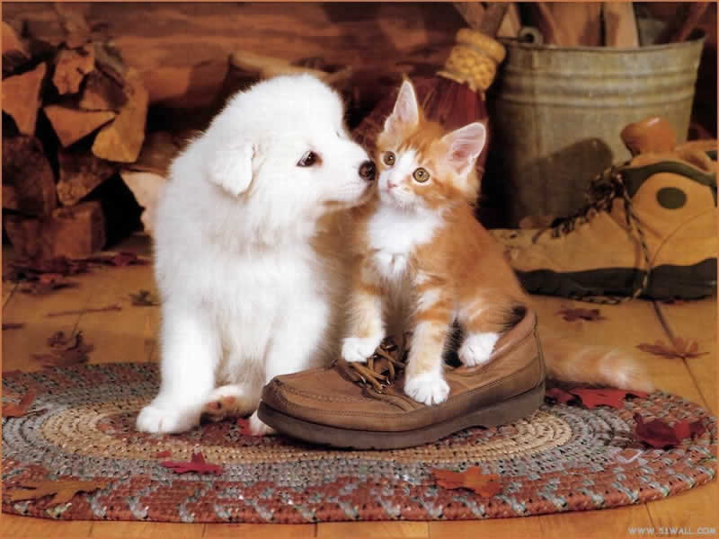 Lovely Pets: cute dogs and cats together - GP03