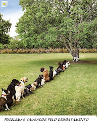 Problema causado por la deforestación