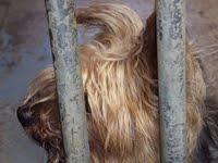 Adopción de animales abandonados.