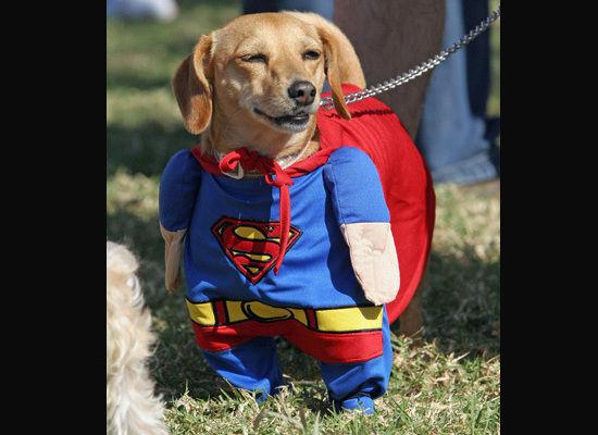 http://2.bp.blogspot.com/_by6YIFO3-FU/TC5IcmBTxbI/AAAAAAAAAg8/o9S9RYPw75I/s1600/Superman+Dog.jpg