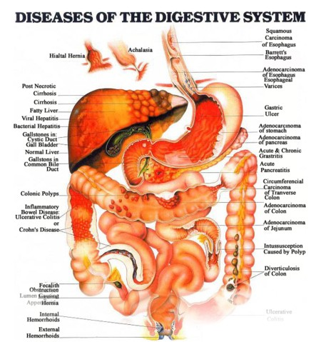 digestive functiondysfunction essay Liver dysfunction this is different to liver disease in that the liver has not yet sustained permanent or sufficient damage to cause gross impairment of its vital functions in those with a dysfunctional liver, the routine blood tests of liver function are generally normal.